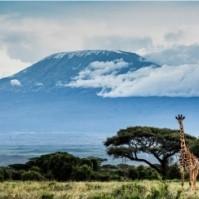 Отдых в Танзании: купить путёвку или тур в Танзанию по выгодной цене с вылетом из Алматы, Нур-Султана (Астаны), Актобе, Шымкента, Караганды от HOT TOUR (ХОТ ТУР)